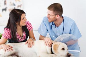 Ветеринары на дому круглосуточно