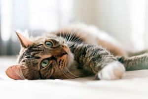хирургия для котов на дому