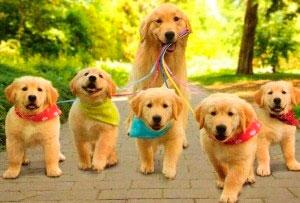 Роды собак на ндому