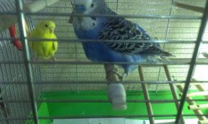 у попугая ослабли лапки